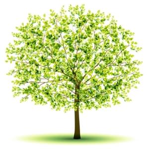 miljö träd
